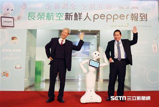 長榮航空引進人型機器人Pepper。(圖/長榮提供)