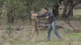 澳洲,拳擊手,袋鼠,旅行,馬克斯,Max,一拳超人,拳擊 圖/Youtub https://youtu.be/FIRT7lf8byw