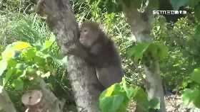 w猴攻八月嬰2400