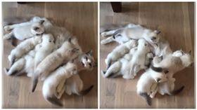 貓媽媽被孩子淹沒 露出一顆頭怒喵:奴才還不快來救我 圖/翻攝自臉書Happy Cats