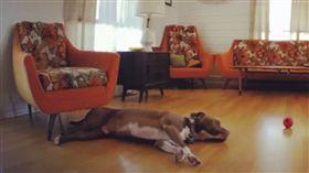 狗,寵物,起床,週一症候群,汪汪,Rumble,上班族.週一,感染 圖/翻攝自Rumble