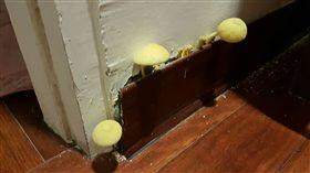 香菇,除濕機,房間,藍瘦香菇,霉菌,護牆板 圖/PTT