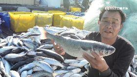 烏魚賺百萬1800