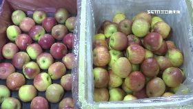 直擊假蜜蘋1800