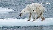 北極冰融光1600