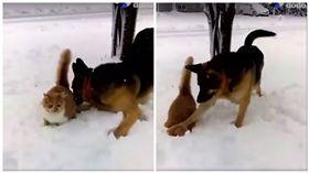 爆笑!喵皇雪中散步 老汪將牠頭埋雪中賞牠一個痛快 圖/翻攝自The Dodo