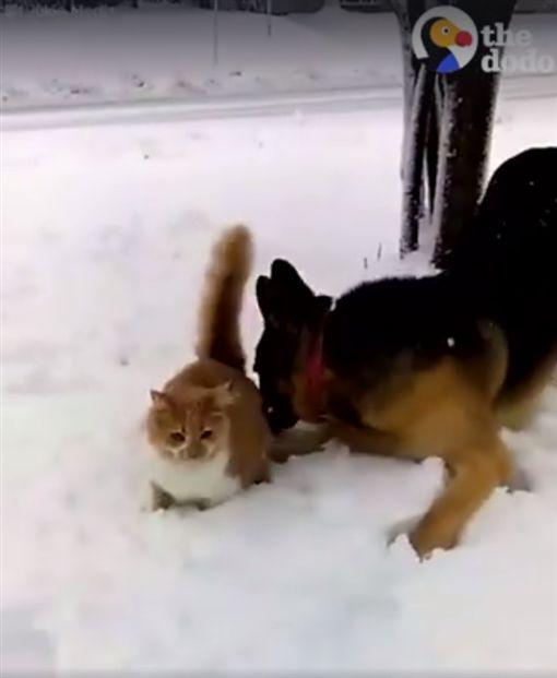 爆笑!喵皇雪中散步 老汪將牠頭埋雪中賞牠一個痛快圖/翻攝自The Dodo
