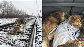 火車來也不離開 狗狗互相取暖等救援。資料來源:Денис Малафеев 臉書