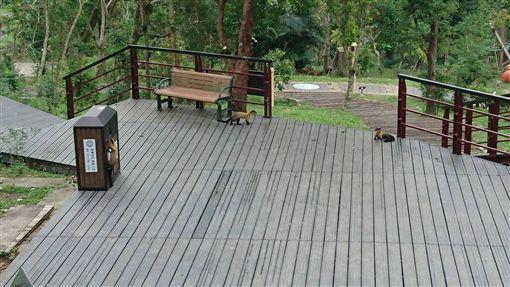 知本國家森林遊樂區喜迎新貴賓 黃喉貂三劍客現蹤