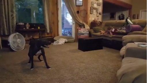 小狗Jenna瘋狂轉圈圈,逗笑小主人。(圖/翻攝自臉書)