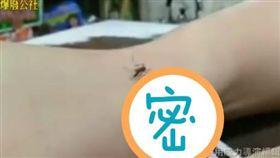 爆料公社,蚊子,剪刀(圖/翻攝自爆料公社)