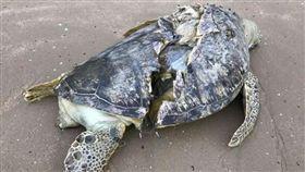 新加坡,樟宜海濱,公園,慢跑,海龜,綠蠵龜,死亡,船隻,螺旋槳,瀕危,動物,保育類(海峽時報 http://www.straitstimes.com/singapore/badly-cut-1m-long-sea-turtle-found-dead-along-changi-beach)