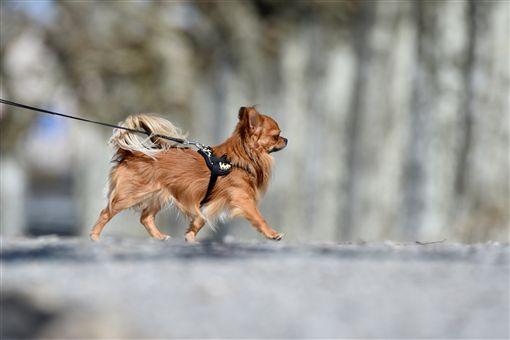 毛小孩,狗,圖/Ares Hsu,flickr CC License