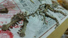 雞骨頭 恐龍 爆料公社