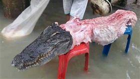 泰國連日水患,鱷魚趁隙偷溜出圍籬,卻被居民射殺當成大餐。(圖/翻攝自《泰國世界日報》)