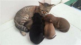 公貓遭狗寶寶討奶。(圖/翻攝自萌物都在這裏勾搭微博)