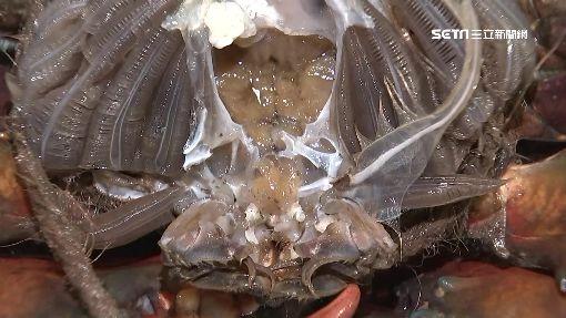陸大閘蟹注膠增重?「果凍狀捏不碎」