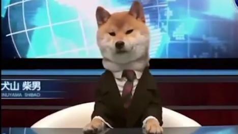 「柴犬」的圖片搜尋結果