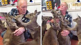 袋鼠,動物,孤兒,救助,野生,澳洲 (圖/翻攝自臉書)