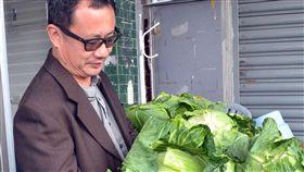 不畏價格崩盤 賴坤成賣出4千顆高麗菜_中央社