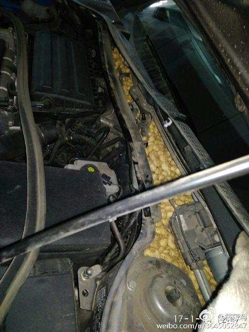 老鼠車內囤滿花生被清空(圖/微博)