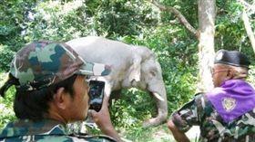 泰國,大象,搬家,危害農作物 圖/翻攝自泰文鮮得新聞報網頁www.khaosod.co.th