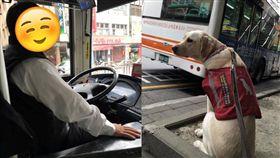 導盲犬搭公車、導盲犬Betty/當Betty遇見Bagel臉書