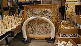 象牙,ivory crush ▲圖/攝影者USFWS Mountain-Prairie, Flickr CC License(https://goo.gl/eGDu9y)
