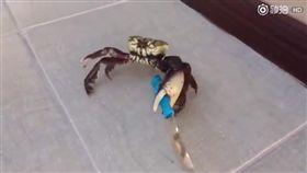 螃蟹(圖/翻攝自YouTube)