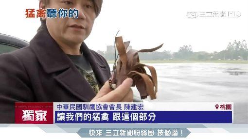 """假餌當作獎賞 直擊跳拳.放飛""""馴鷹術"""""""