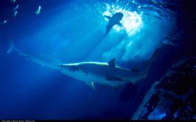 加拿大北極圈海域傳來怪聲,動物被嚇跑。(示意圖/Moyan Brenn, Flickr CC License)  https://www.flickr.com/photos/aigle_dore/15571349457/in/photolist-pHZeGn-8xD988-Zuah-6SWpoq-9zLyeF-8xGbgq-8XfRNT-8953pp-6ohaC-2WPhvG-21HWSU-8mE