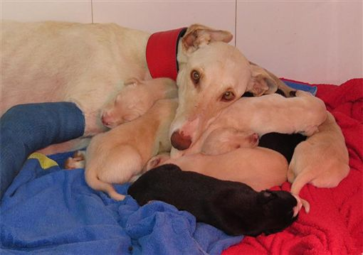 母浪浪和寶寶們被安置。(圖/翻攝自Clinivet Turre Clinica Veterinaria)