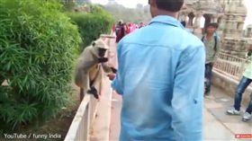 印度,猴子,遊客,甩耳光(圖/翻攝自YouTube)