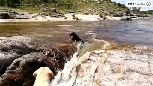 狗,毛小孩,河邊(圖/翻攝自YouTube)