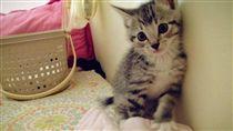 貓,毛小孩,喵星人 圖/資料照
