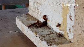 屋頂養蜜蜂1800