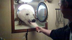 ▲網友的叔叔曾在船上與北極熊吃下午茶。(圖/翻攝自johnny_love reddit) https://www.reddit.com/r/pics/comments/5e0h7z/my_uncle_who_works_on_an_arctic_research_vessel/