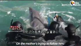 日血色海豚1900