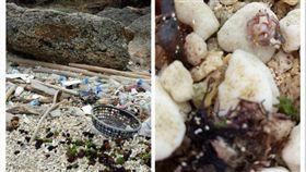 琉球,小琉球,沙攤,港口,海,礁岸,油汙,垃圾,拇指,寄居蟹,鄉村,BOT,保護 圖/Dcardhttps://goo.gl/9vLdbH