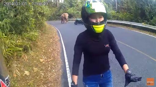 大象 圖/翻攝自Storyful YouTube