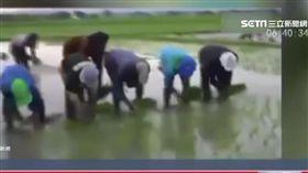 插秧神技! 中國農民