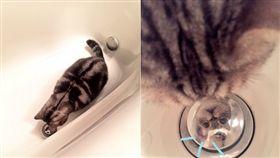 貓咪盯著排水孔。(圖/翻攝自推特)