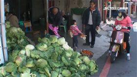 高麗菜,菜農,菜販,擺攤