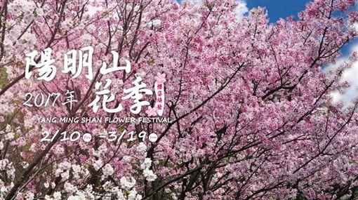 陽明山花季 圖/翻攝自陽明山花季官網