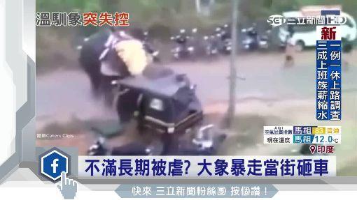 大象也暴走! 頂飛女遊客.當街砸車