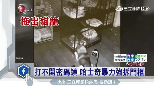 """犬界脫逃天王! 哈士奇""""率眾""""逃出醫院"""