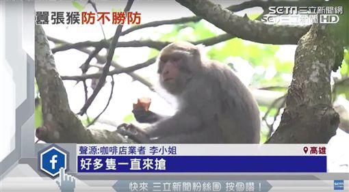氣摔盤趕猴sot