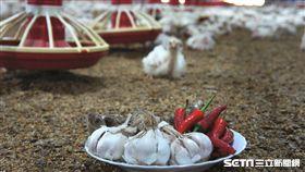 蒜頭辣椒雞