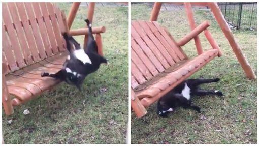 搖椅,羊,跌倒(圖/翻攝自Pretty 52臉書)