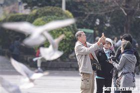 陸客,觀光,旅遊,自由行,旅行團,禽流感,鴿子,H5N6,防疫,疾管署,農委會 圖/記者林敬旻攝